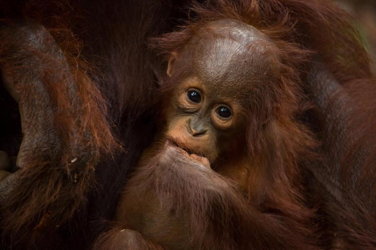 Borneo Wildlife Discoverer tour