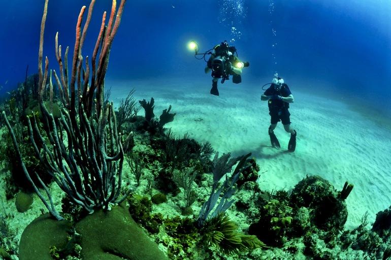 Scuba reef underwater sea-Australia-681516_P