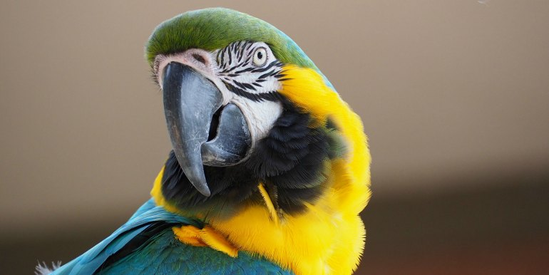 Colorful Macaw in the Amazon rainforest