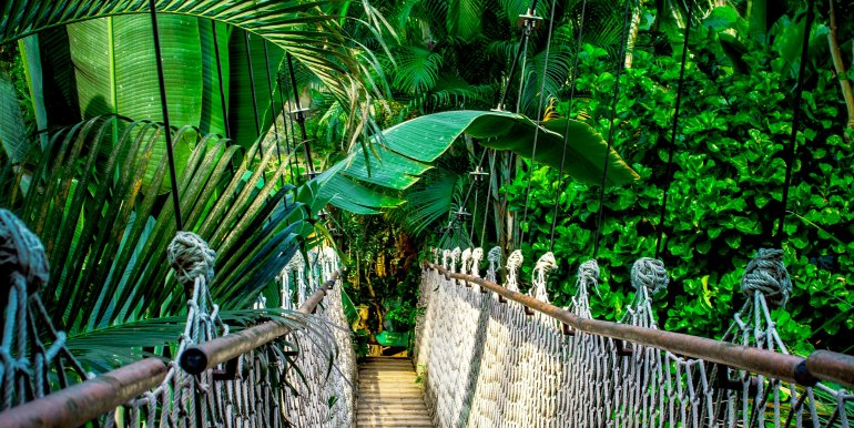 Bridge through forest canopy in the Amazon