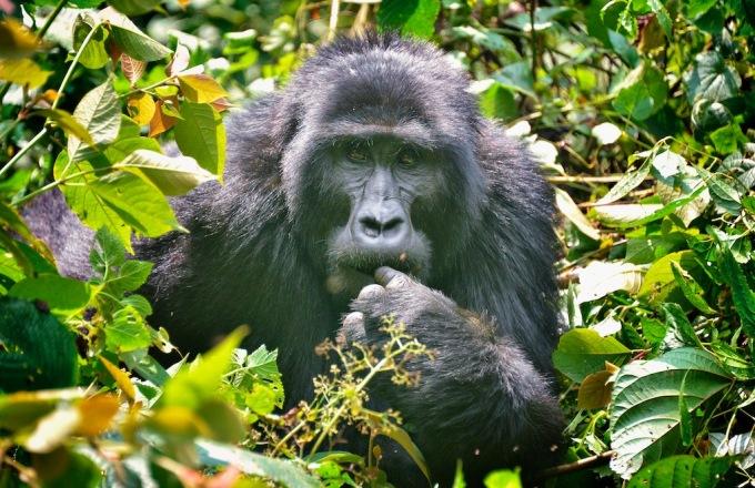 Uganda: The Pearl of Africa tour