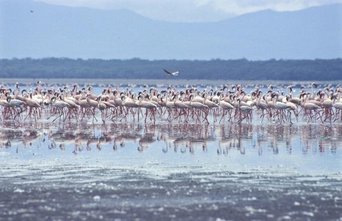 15 Days Bird watching Safari tour