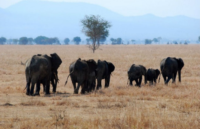 Affordable Tanzania Kifaru Group Safari tour