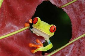 Natural Wonders of Costa Rica Summer 2018