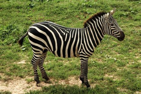 Tanzania: Northward Migration Safari tour