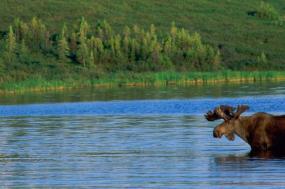 Alaskan Wildlife & Wilderness tour