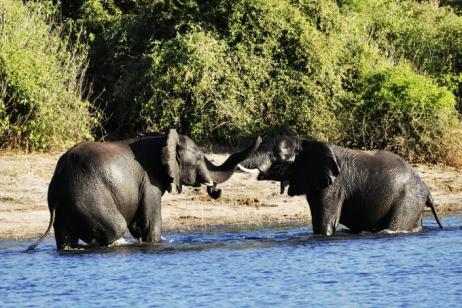 South Africa and Botswana tour