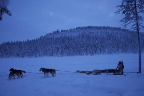 Sweden: Dogsledding to the Ice Hotel  tour