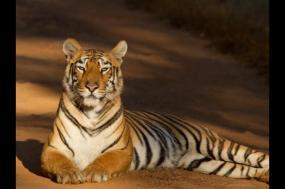 Indian Wildlife Adventure tour