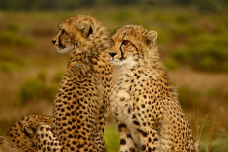 Southern Africa Safari by River & Rail  tour