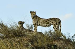 6 Days Classic Safaris (Lake Manyara, Serengeti Plains, Ngorongoro Crater, Tarangire) tour