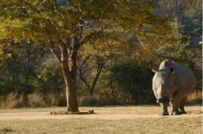 Southern Africa: South Africa, Zimbabwe, Namibia and Botswana tour
