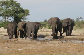 The Botswana Walking Safari tour