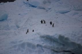 Antarctica Multi-Sport Adventure tour