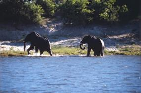 7 Day-Chobe River & Selinda Safari tour
