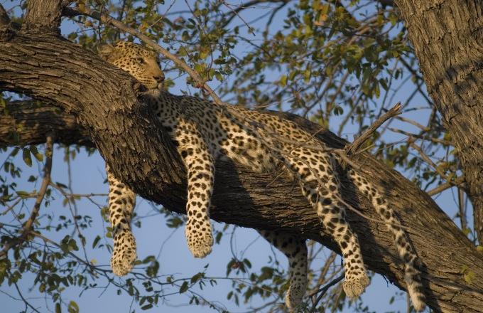 6 Nights Exclusive Botswana tour