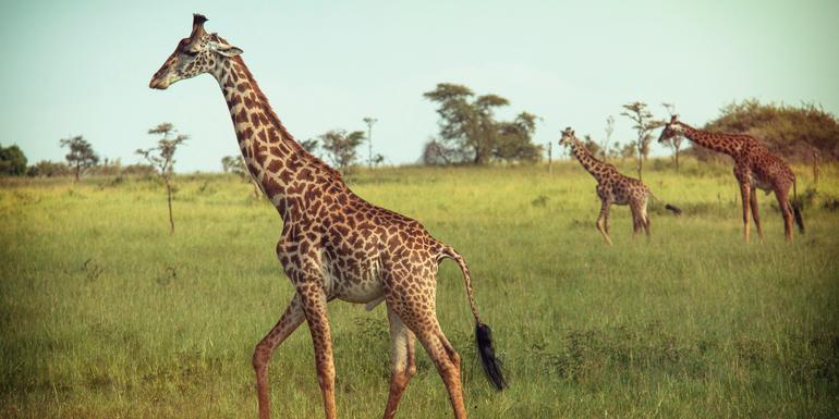 Kenya & Tanzania Overland Express (Nairobi Loop) tour