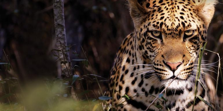Kruger Camping Safari tour