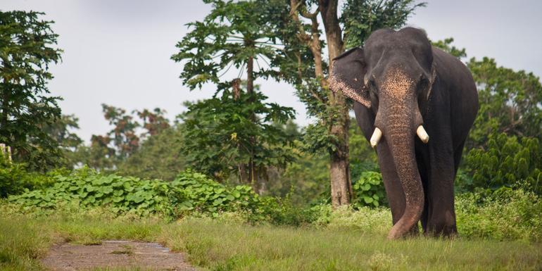 Tigers, Temples & Wildlife Adventure tour