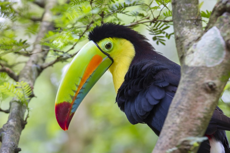 Ultimate Costa Rica Hiking Adventure tour