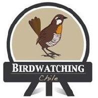 Birdwatching Chile