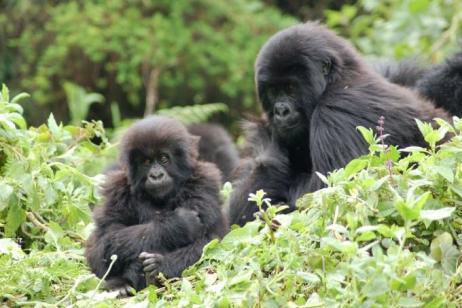 Beyond the Big Five: Uganda, Tanzania, & the Spice Island  tour