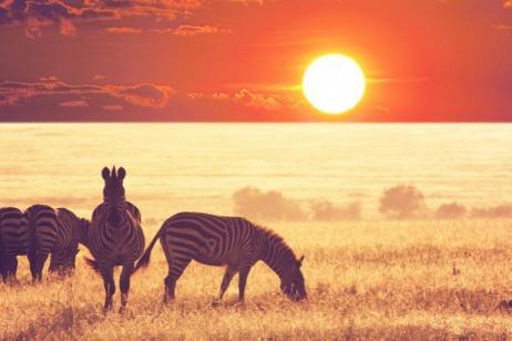 Tanzania Adventure Safari tour