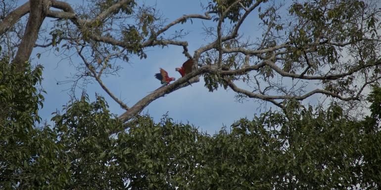 Local Living Ecuador—Amazon Jungle tour