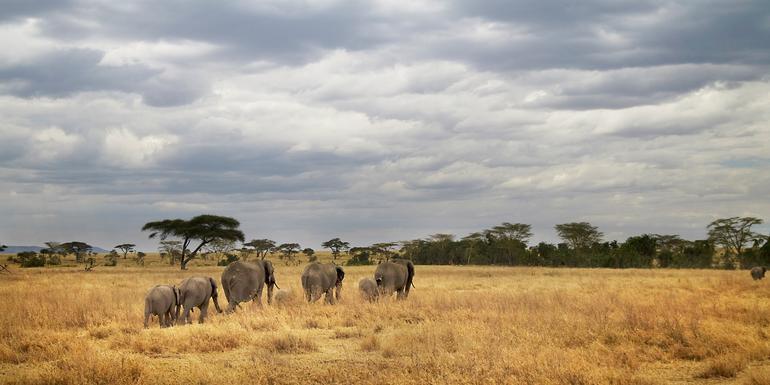Tanzania Camping Adventure tour