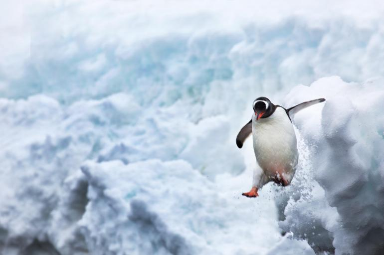 Fly & Cruise – Antarctic Circle Quest tour