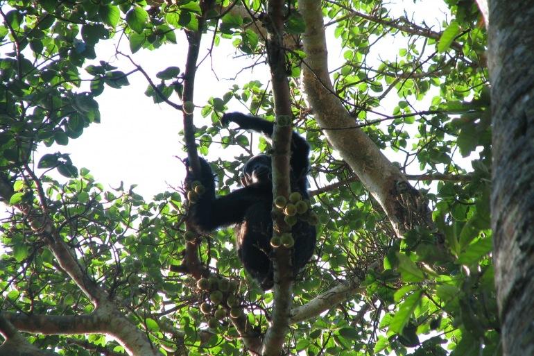7 Days Gorillas & Chimps on a Budget tour