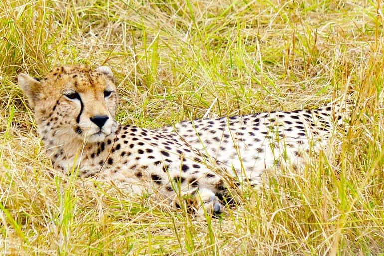 Meru & Masai Mara Premier Safari tour