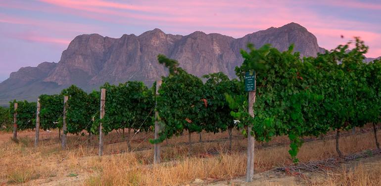 Cape Town & Winelands tour