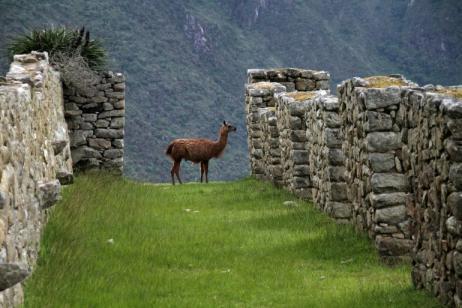Inca Trail Trek tour