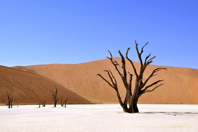 Cape & Dunes Discoverer tour