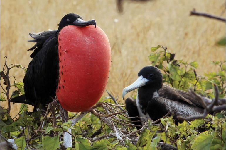 Galapagos Isabela Island Galapagos Venture Trip