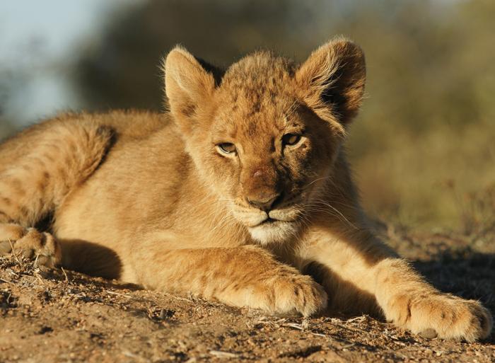 Johannesburg Kruger National Park Kruger to Vic Falls Trip