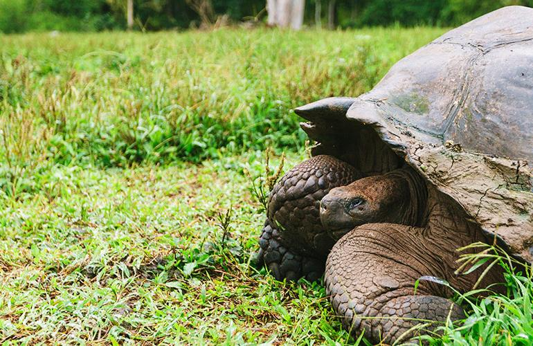 Ultimate Galapagos: Central Islands (Daphne) tour