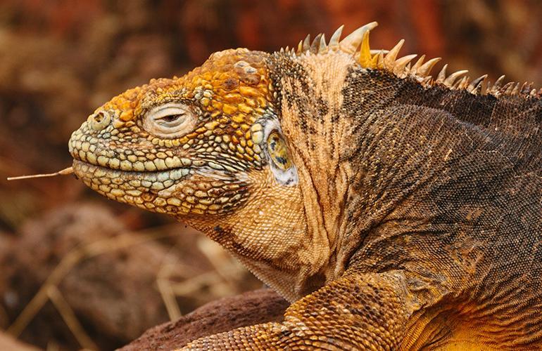Galapagos Venture tour