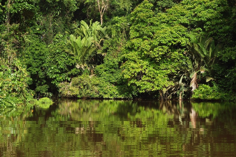 Greenary over the National park-Tortuguero-Africa-2259292-P