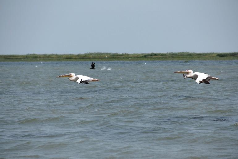 Nature view of Danube Delta, Europe_P