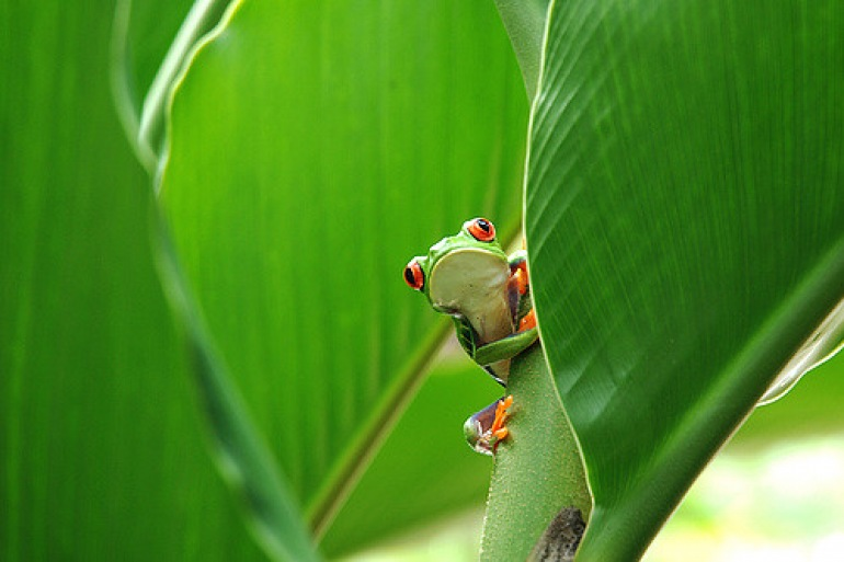 Wildlife scenery-CostaRica-p