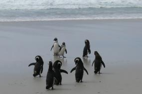 Adventure from Cape Horn to the Penguins of Antarctica tour