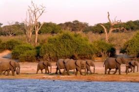 9 Day Makgadikgadi, Moremi, Okavango & Chobe Big 5 Safari tour