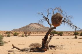 Namibia Photo Safari