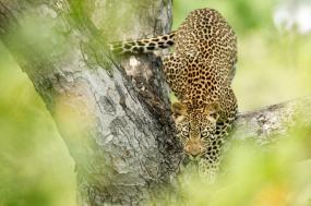 9 Day Adventure Africa Luxury Safari
