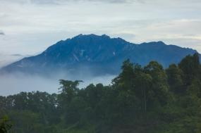 Borneo And Brunei Wildlife Expedition