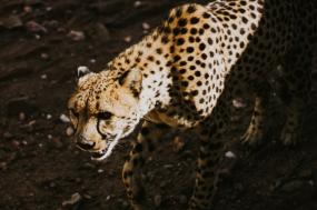 12 Day South Africa, Vic Falls & Botswana Across Africa Safari