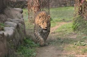 Pantanal Jaguar Safari