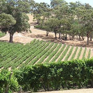 Wines of Australia & New Zealand with the Great Barrier Reef & Fiji tour